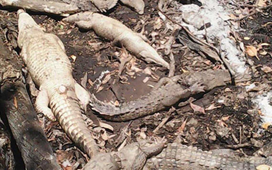 rep-chiapas-cocodrilos-masacre2