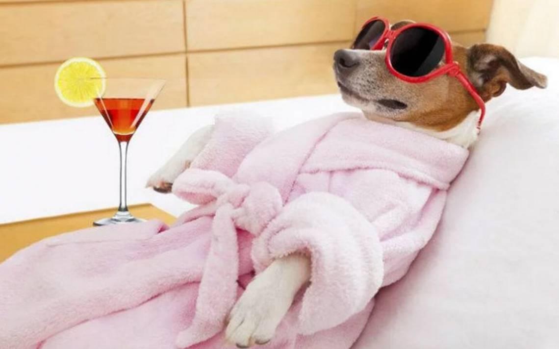 Desde helados hasta funerales, los lujos y servicios para las mascotas - El Sol de México   Noticias, Deportes, Gossip, Columnas