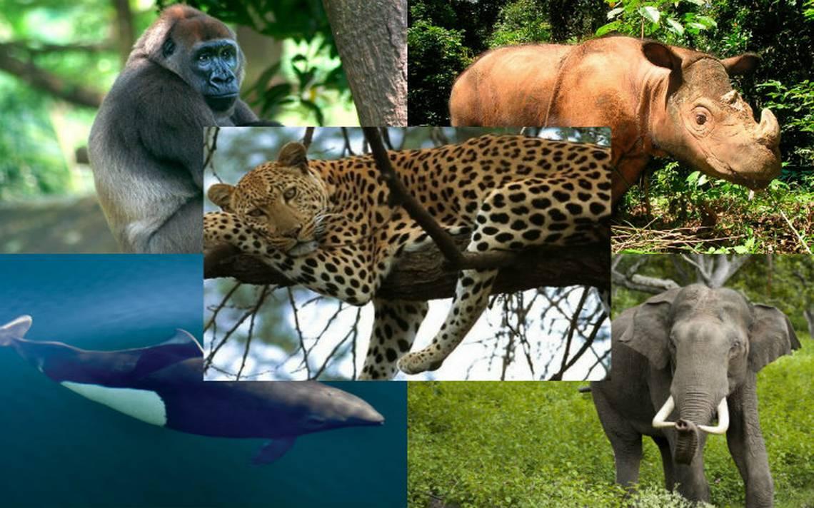 En Peligro De Extinción: 10 Animales Que Están En Peligro Crítico De Extinción