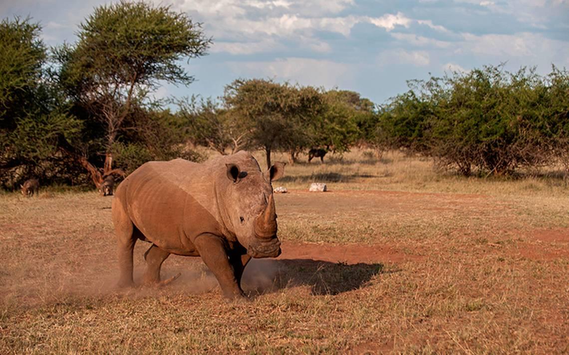 rinoceronte-cuernos.jpg