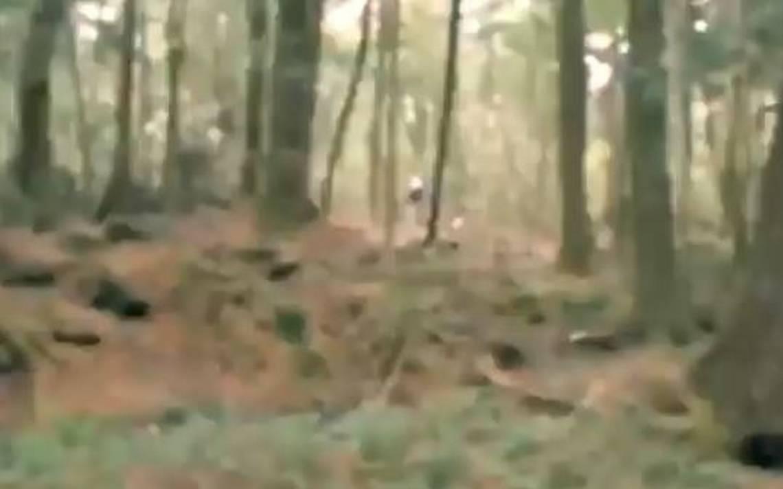 Bosque japón.JPG