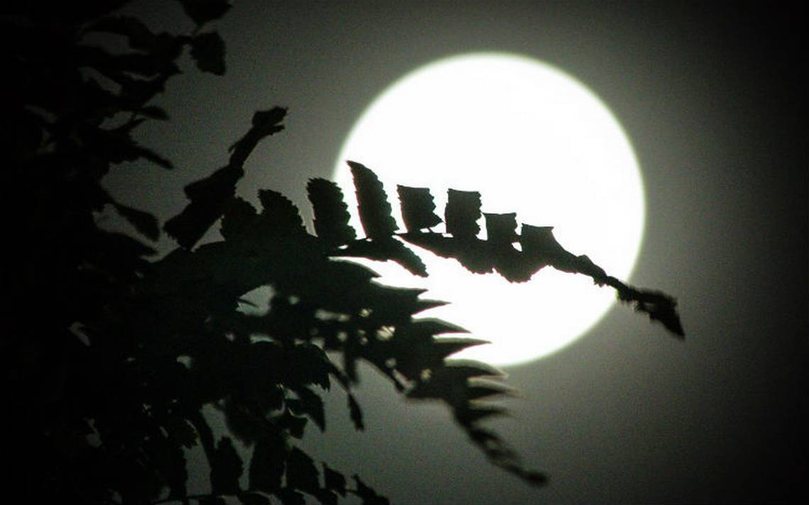 luna robert2.jpg