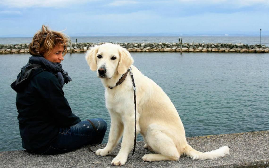 Oxitocina-perros-humanos.jpg