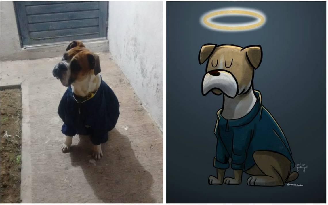 Justicia Para Miguel Esto Sabemos Sobre La Cruda Muerte Del Perro