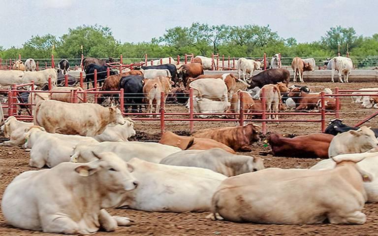 ganaderos niegan que duarte se haya apropiado de reses info rural