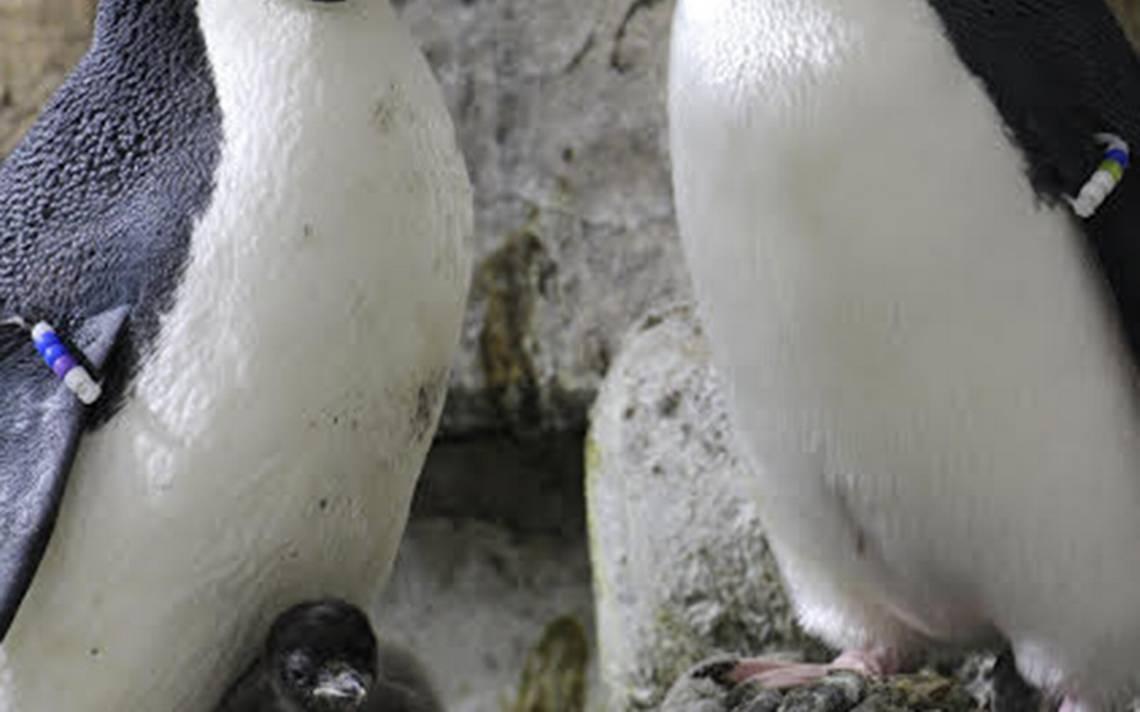 pinguinos-guadalajara.jpg