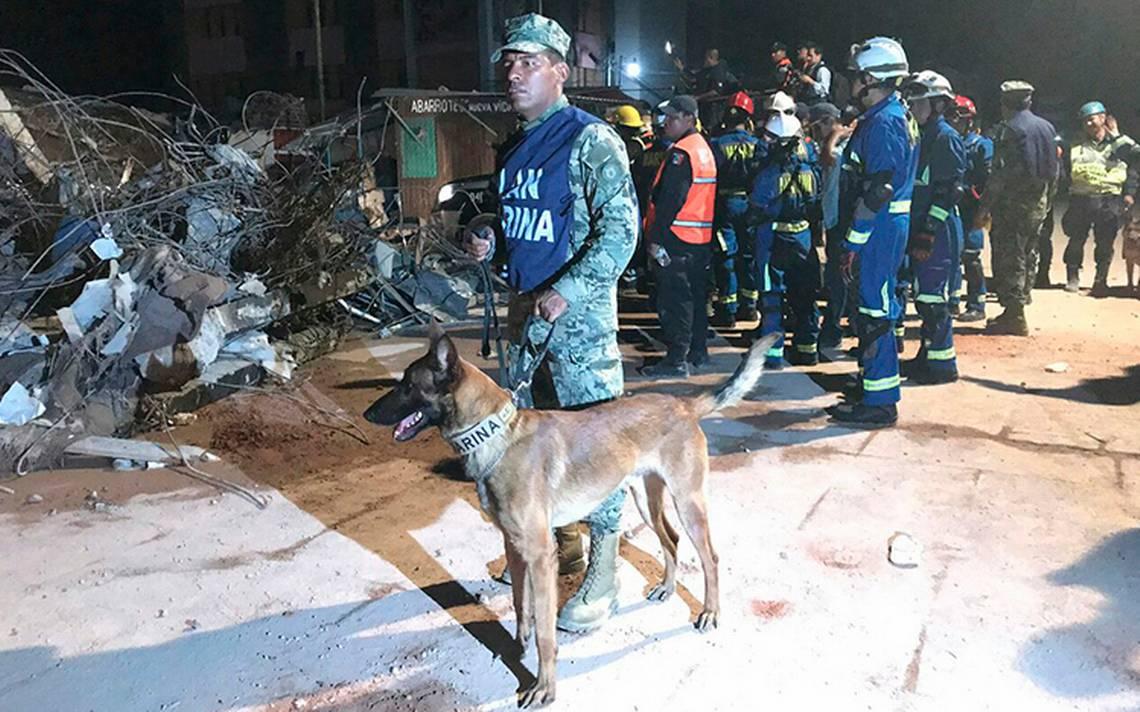 semar-sismo-perros-oaxaca-rescate-1.jpg