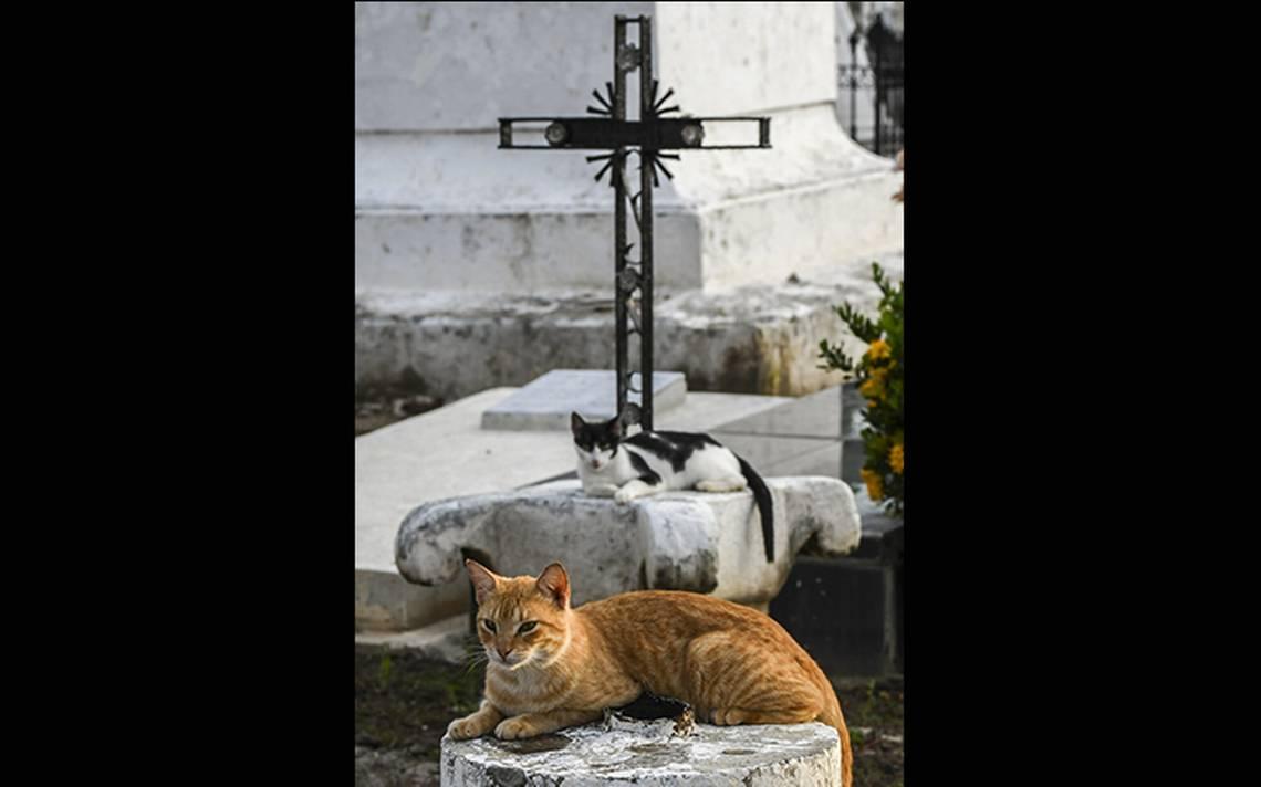 gatos-tumbas-10.jpg