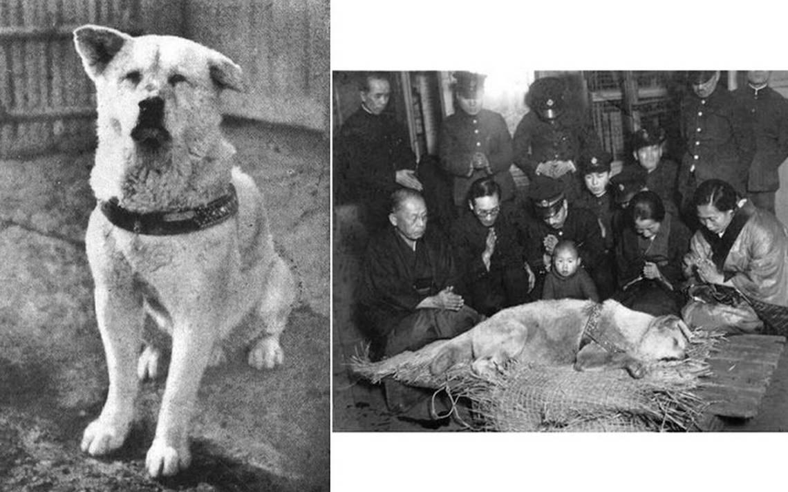 hachiko-perro.jpg