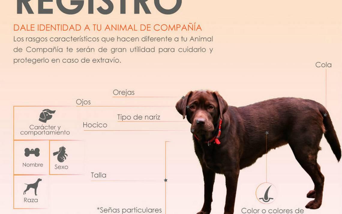 img_registro-perros.JPG