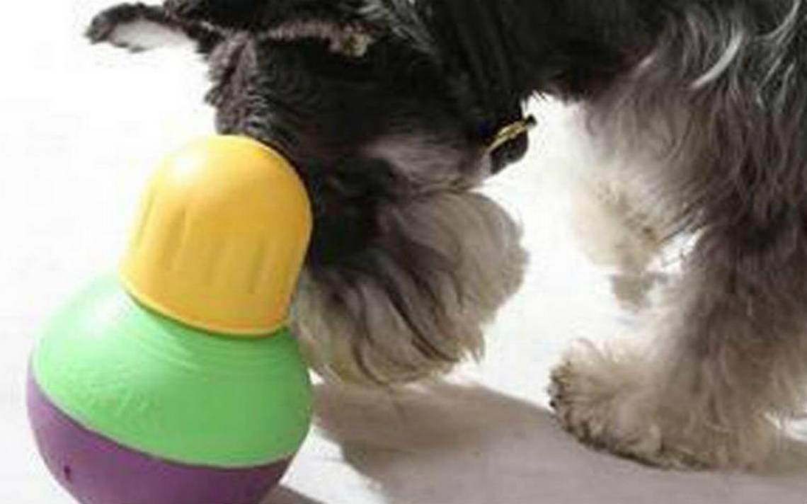 Jugete-perro-premio.jpg