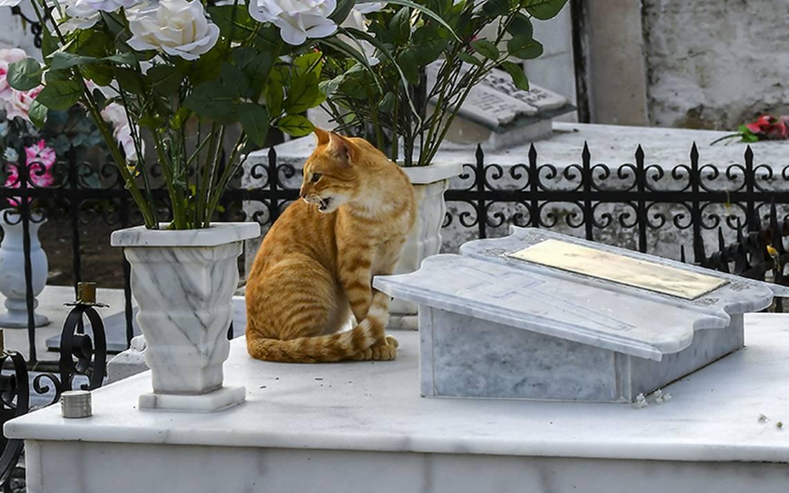 gatos-tumbas-6.jpg