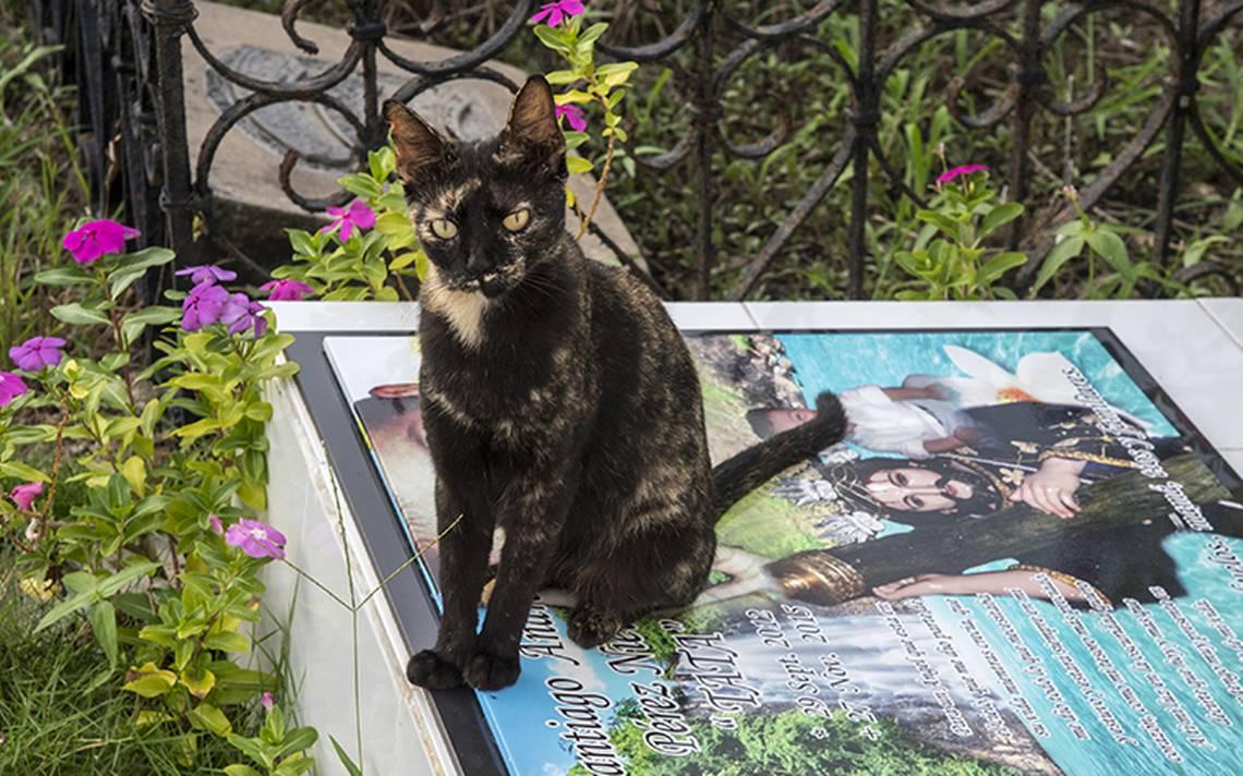gatos-tumbas-5.jpg