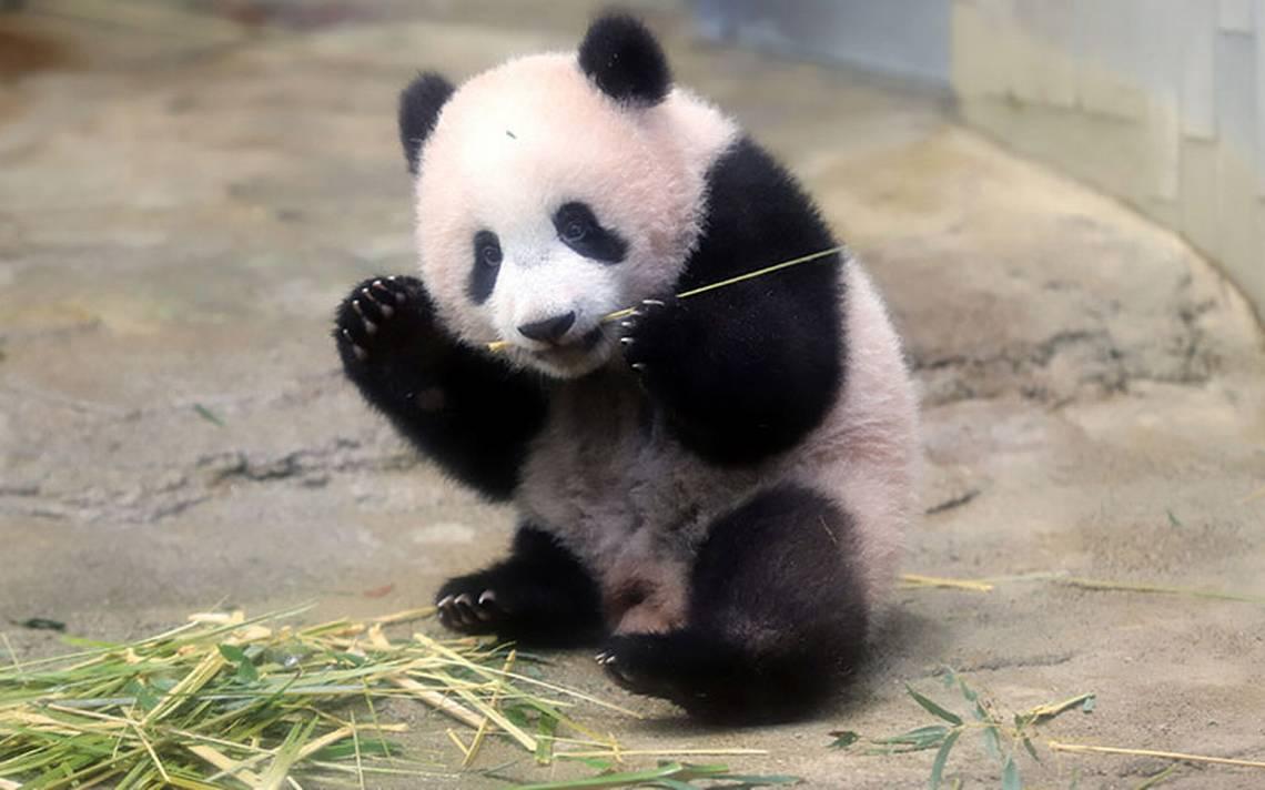 bebe-panda_japon2.jpg