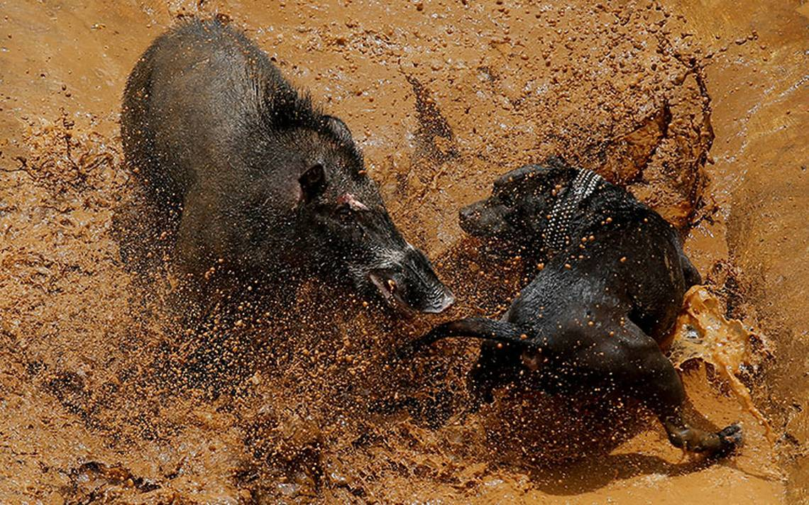 pelea_perro_indonesia_4.jpg