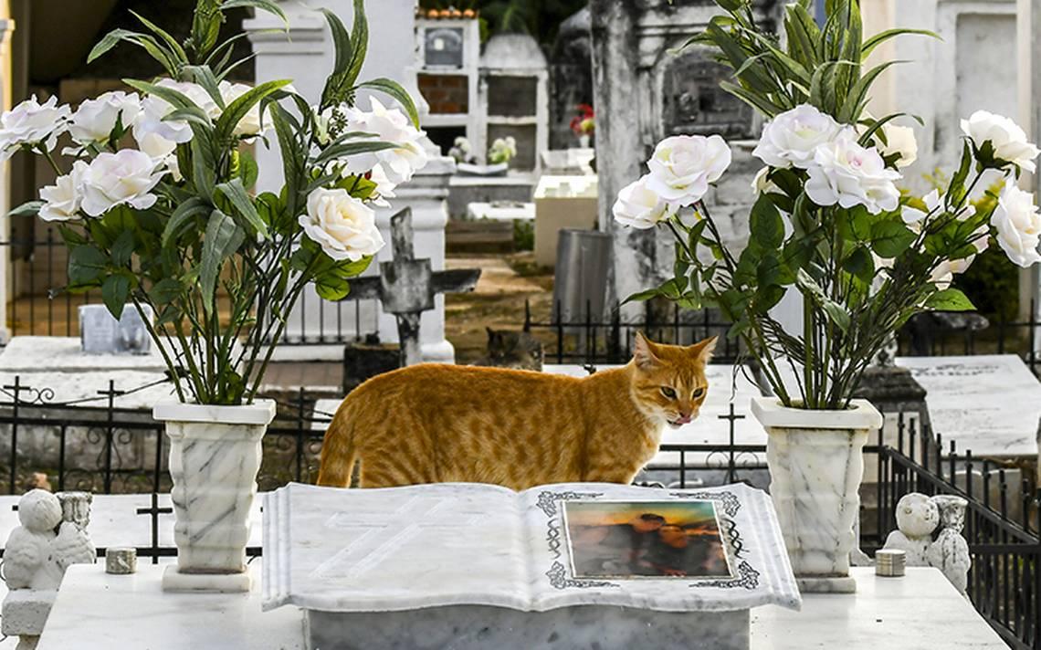 gatos-tumbas-7.jpg