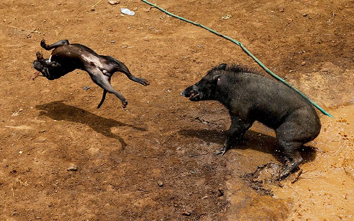 pelea_perro_indonesia_2.jpg