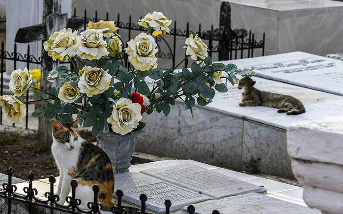 Pacto con el diablo? gatos cuidan tumbas en panteón de Colombia - El ...