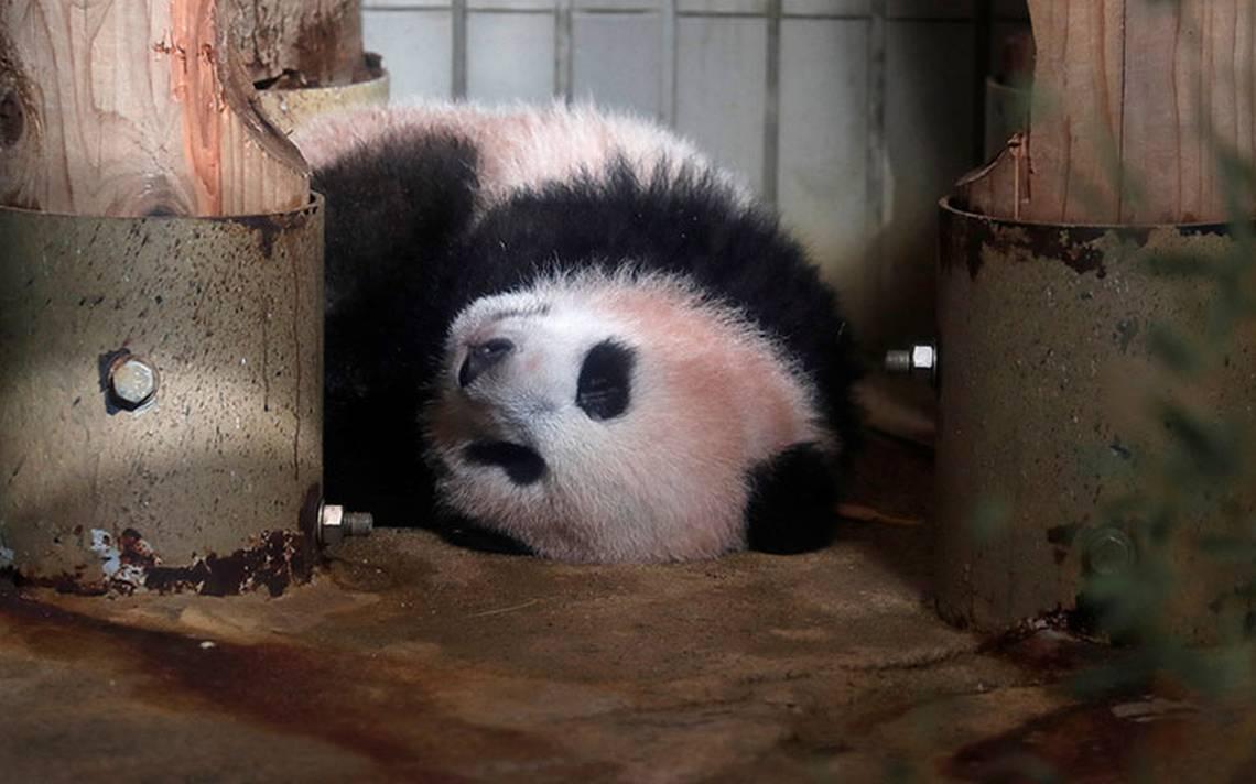 bebe-panda_japon3.jpg