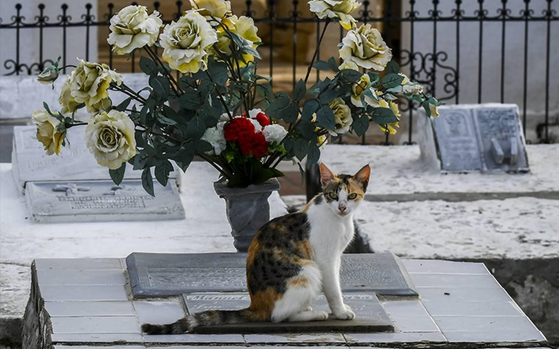 gatos-tumbas-2.jpg