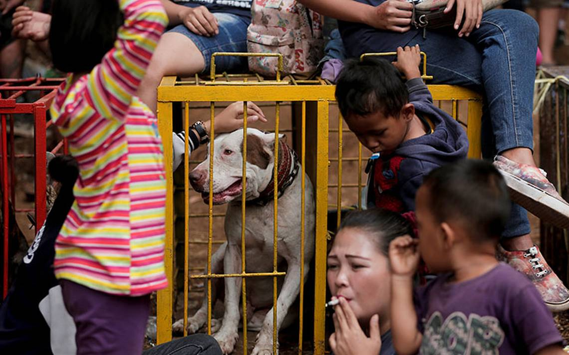 pelea_perro_indonesia.jpg