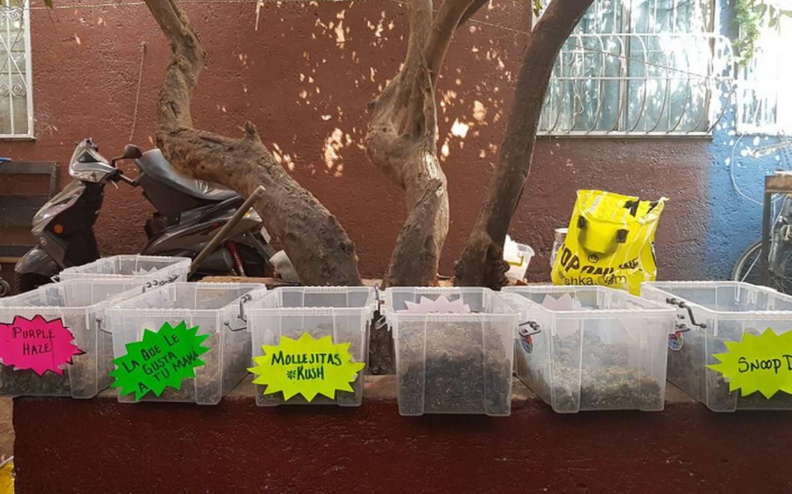 marihuana-tepito-2.png