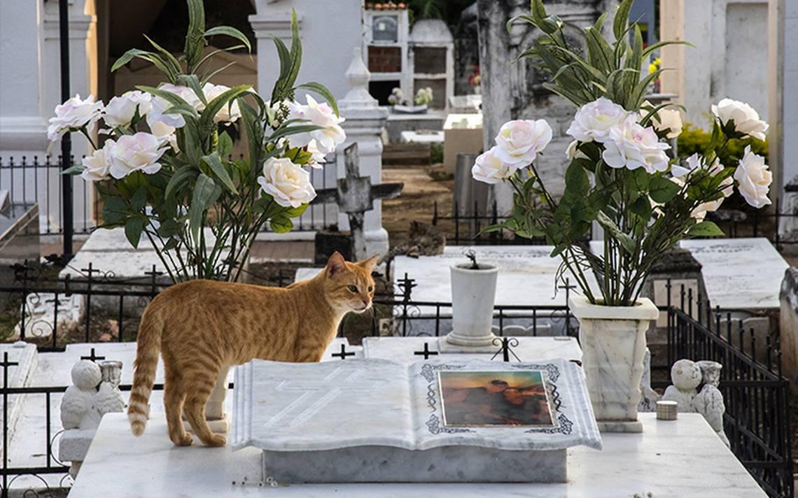 gatos-tumbas-.jpg