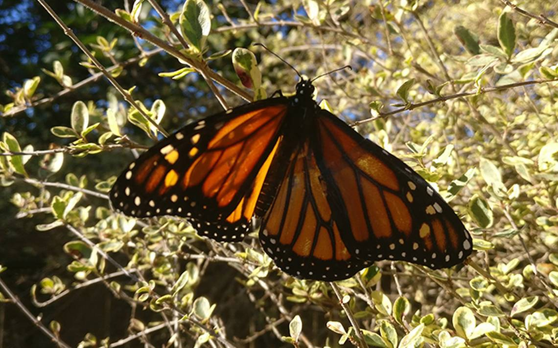 mariposa-ala.jpg