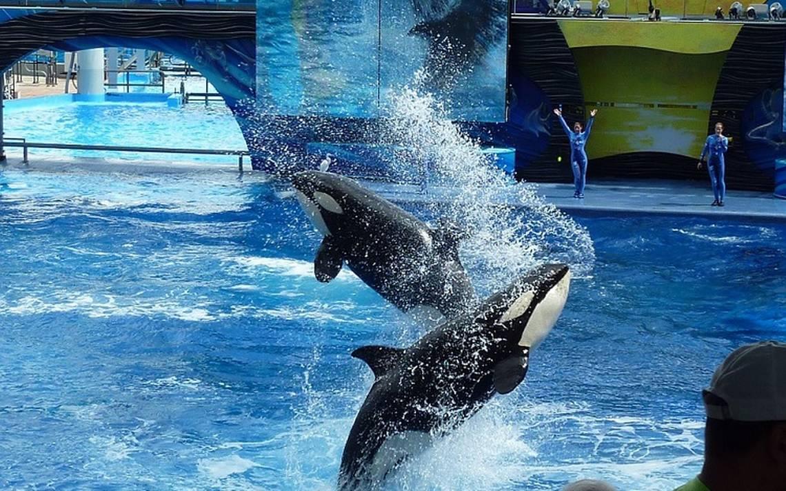 killer-whale-113527_960_720.jpg
