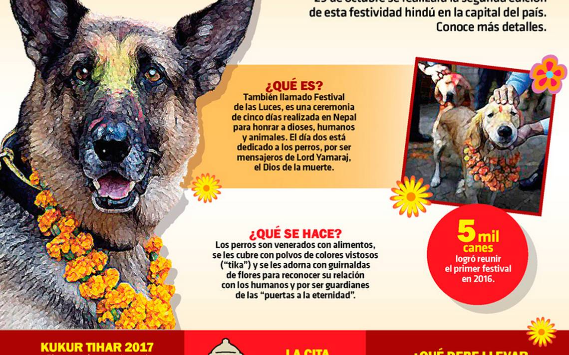 kukurtihar-cdmx-mascotas-perros-2.jpg