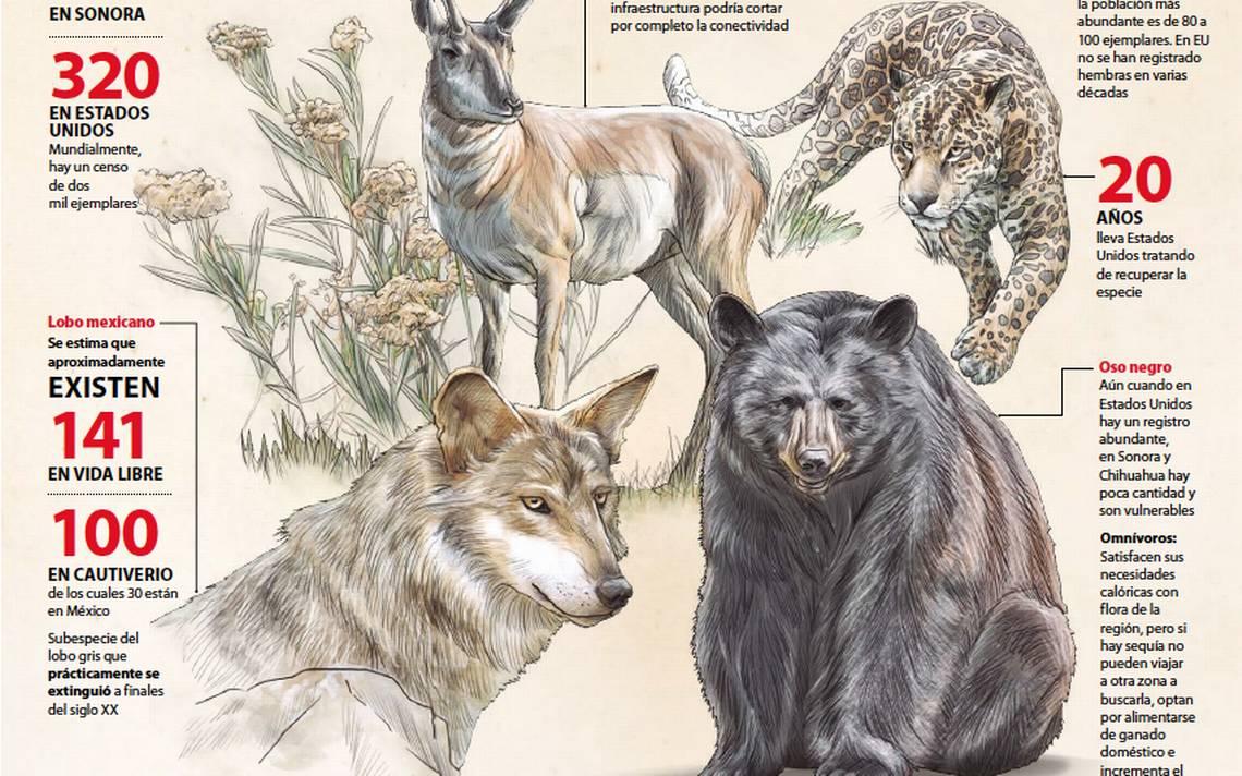 especies.jpg