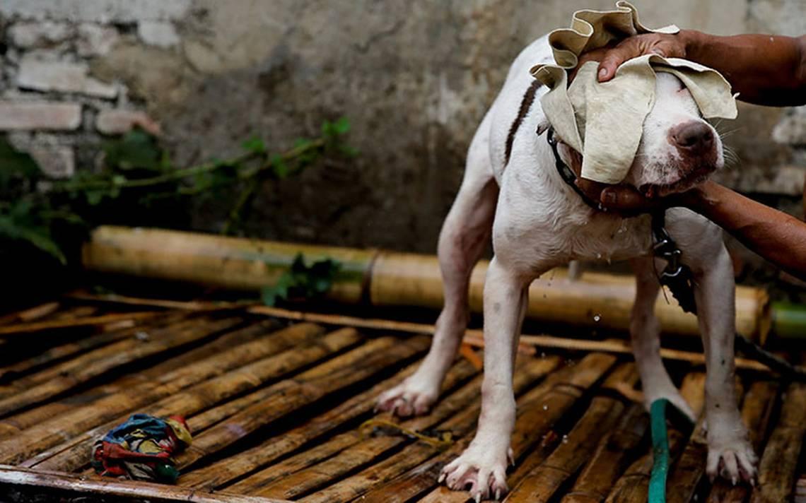 pelea_perro_indonesia_8.jpg