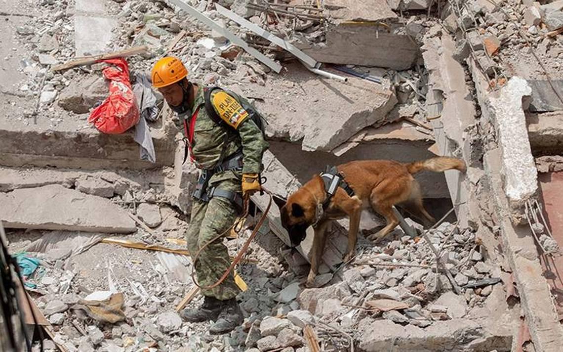 Binomios Canófilos perros CDMX sismo.jpg