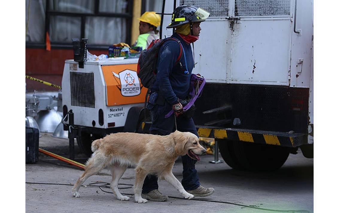 sismo-perros-rescatistas.jpg