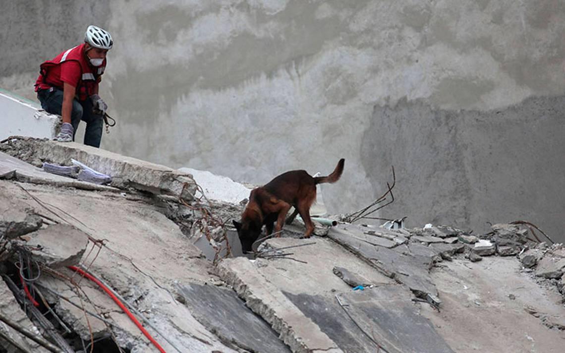perros-rescatistas-chichi.jpg