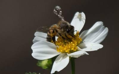 Resultado de imagen para UNAM y Bomberos firman convenio para preservar enjambres de abejas