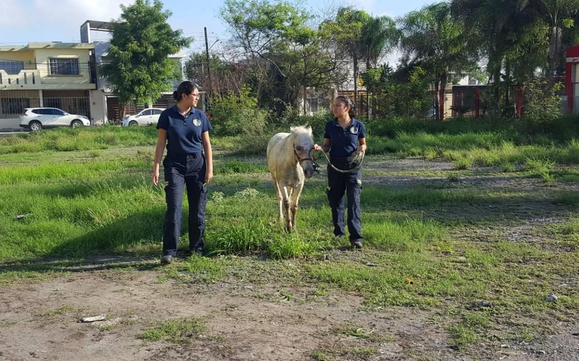 caballo4.jpg